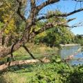 Herrick Lake ForestPreserve